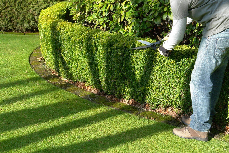 Quel est le rôle d'un paysagiste?